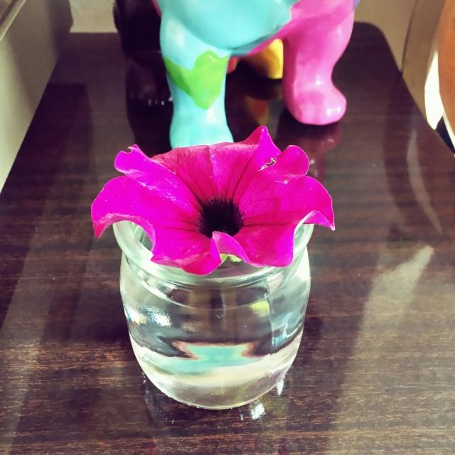 La fameuse fleur...